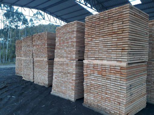 Eucalyptus lumber